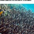 Vi invitiamo a sottoscrivere l'appello promosso da Il Tirreno Stanno distruggendo il corallo rosso sui fondali di Calafuria. I cittadini e gli amanti del mare si ribellano. Oggi in Toscana c'è un vuoto legislativo che […]