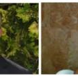 Seminario, gratuito ed aperto al pubblico. Venerdì 8 giugno 2012 dalle ore 17.00 alle ore 20.00 presso la Sala Capraia della Camera di Commercio di Livorno L'Associazione ideaLi prosegue il secondo semestre della Scuola di […]